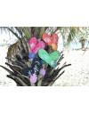Flip-flops CALIFORNIA women
